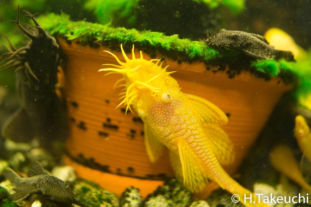 写真日記-熱帯魚(2015年7月20日,DSC-RX1R)
